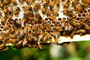 bee hive removal miami